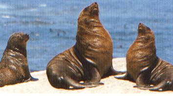 Seals pic